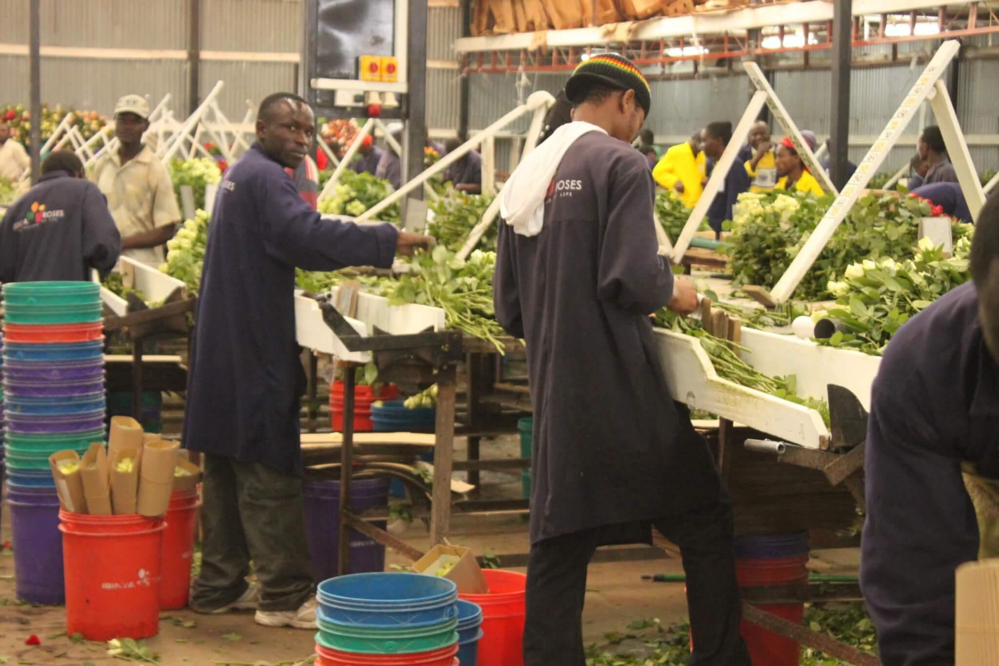 Corona in Afrika: 4 Folgen für den Kontinent